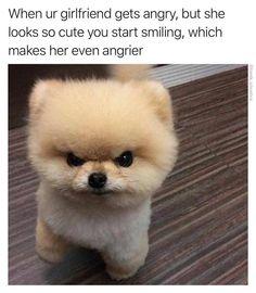 34 Funny Animal Memes