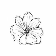 Zinnia Flower Drawing Tropical Zinnia Flower Blossom Botanical ...