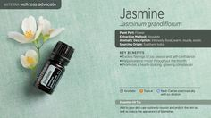 "Renowned as the ""King of Flowers,"" Jasmine is prized for its delicate white flowers, which emit a highly fragrant aroma for up to 36 hours after being hand-picked. Extracting Jasmine is labor-intensive and must be done at daybreak, when the flowers are most fragrant and have the highest percentage of components intact. Jasmine essential oil provides a myriad of benefits, both aromatically and topically. Its esteemed fragrance can be sedating, yet euphoric, instilling a positive outlook."