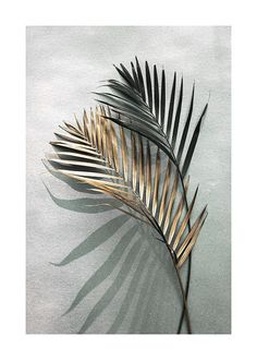 Gold and Green Shadow Poster in the group Posters & Prints / Botanical at Desenio AB Modern Art Prints, Wall Art Prints, Poster Prints, Gold Poster, Poster Poster, Buy Posters Online, Prints Online, Art Online, Groups Poster