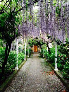Garden in Levanto - Wisteria alleyway Giardino a Levanto - Pergolato con glicine
