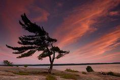 *🇨🇦 Windswept Sunset (Killbear Provincial Park) by Jason Idzerda Landscape Photos, Landscape Art, Landscape Photography, Nature Photography, Landscape Sketch, Pictures To Paint, Art Pictures, Art Pics, Nature Paintings