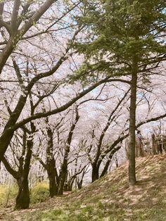 Rap Monster ❤ [BTS Trans Tweet] 2017 벚꽃  #RM / 2017 cherry blossom  #RM (벚꽃이 떨어져요~ 또 조금씩 멀어져요~ 보고싶다~ 김남준) #BTS #방탄소년단