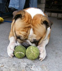 I will not share my balls...typical Auggie!