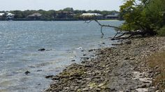 Shoreline view with over arching tree #discovermartin