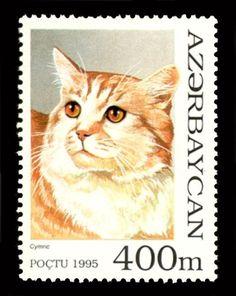 TIGRE ARZERBAGIAN | Il cane, il gatto, la tigre, il lupo, l'orso, il panda e la foca: i ...