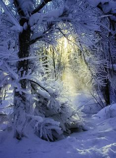 """coiour-my-world: """"Soft morning rays on the cold winter snow """" Winter Szenen, Winter Magic, Winter Time, Winter Christmas, Winter Light, Blue Christmas, I Love Snow, Winter's Tale, Snowy Day"""