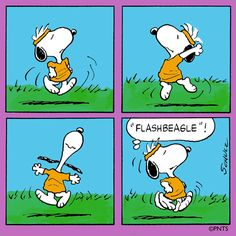 Flashbeagle!