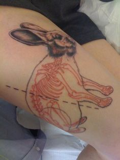 Anatomical Bunny