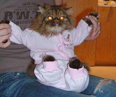 Yep! We sell catsuits :)