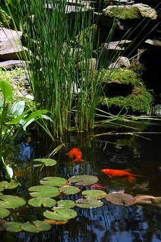 Fish Pond Backyard Ideas Planning a Backyard Fish Pond Fish Pond Backyard Ideas. A backyard pond can add a great deal of charm and appeal to your garden, but good planning is essential.