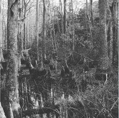 December swamplands