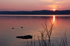 Sunset Water Nature Reflection Beauty In Nature Tranquility Tranquil Scene Scenics Lake Sky Waterfront Silhouette Outdoors No People Sun Cloud - Sky Floating On Water Sunlight And Shadow Lights And Shadows Sunset_collection Sunset Silhouettes Sunsets Birds_collection Lake Starnberg Starnbergersee