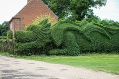 John Brooker, of Norfolk, England, has spent 10 years sculpting the hedgerow outside his cottage into a 100 ft. long, magnificent dragon.