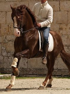 Rare chestnut PRE stallion.