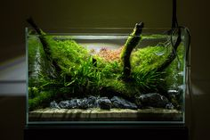 Unfinished 60cm Nature Aquarium | by Johnny Ciotti