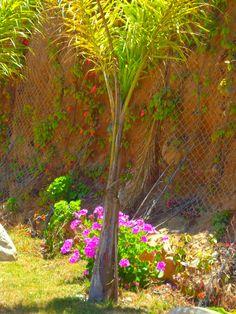 Amplio y hermoso Jardin de Fiestas Calypso Gardens, localizado en la delegación de Playas de Tijuana, Baja California, México!