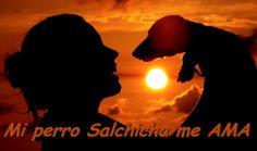 FACEBOOK: Mi perro Salchicha me AMA https://www.facebook.com/pages/Mi-perro-Salchicha-me-AMA/425990280846978