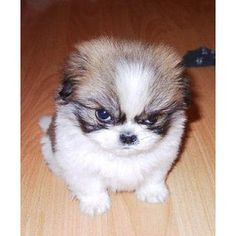 So cute, so angry.