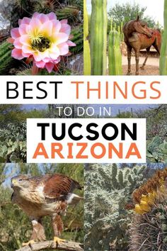 Best Things to Do in Tucson Arizona - Your guide to (FUN) in and around this stunning Sonoran desert location of the Southwest USA Arizona Road Trip, Arizona Travel, Road Trip Usa, Best Places To Eat, Best Places To Travel, Vacation Places, Vacation Ideas, Vacations, Solo Travel