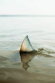 des poissons merveilleux