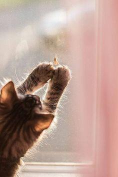 I catch! | Very cool photo blog