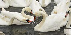 Donauinsel Vienna, Austria, Bird, Pets, Photography, Animals, Island, Photograph, Animales
