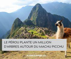 Le Pérou Plante Un Million D'arbres Autour Du Machu Picchu - Planet Lovers Lovers, News, Animals, Mountain, Plant, Animales, Animaux, Animal, Animais