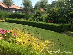 Wizytówka - Any ogrod mały czyli wygrana walka z ugorem - Forum ogrodnicze - Ogrodowisko Plants, Gardens, Landscape Planner, Plant, Planets