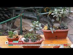 (1) Суккуленты: уход, выращивание и размножение - Садоводство для чайников - YouTube
