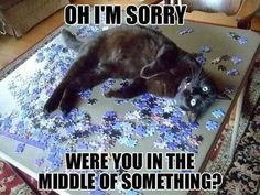 Why I've not been able to work a jigsaw puzzle since the mid 80's. That's okay tho, I love my kittehs more.