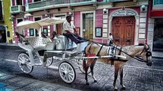Take a ride and go sightseeing in one of these cool horse drawn buggies, it's quite an experience! Ask the driver to take you along beautiful tree lined Paseo de Montejo, full of historic buildings and monuments.