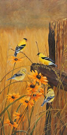 "Two pair of Goldfinches & Black-eyed susans on a sunny day. ""Golden Treasures"" Giclee prints of original oil painting by Johanna Lerwick - Wildlife/Nature Artist."