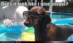 funny dog pictures - Does it look like i give a woof?
