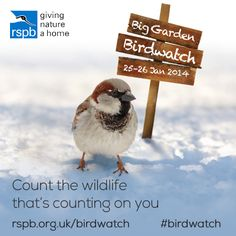Join us for Big Garden Birdwatch 25 - 27 January Registration opens 11 December Find out more. Big Garden Birdwatch, Count On You, Marine Conservation, Nature Activities, Save The Bees, Bird Watching, Weekend Is Over, Garden Beds, Organic Gardening