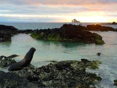 A sea lion watches the sunset on Galapagos islands.