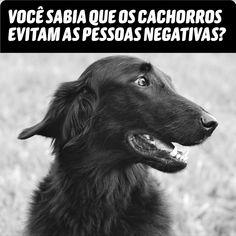 No nosso site você vai saber por que os cachorros evitam as pessoas negativas. Awesome Things, Animals, Sad, Like Animals, Pretty Animals, Pets, Jesus Crucifixion, Negative People, Reflection Art