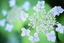 Wallpapers Flowers HD