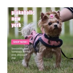 #Pinkaholic is the cutest brand for dog accessories for small dogs like this adorable #Yorkie. Check out harnesses, clothing and more at http://www.chic-dog-boutique.com/Pinkaholic_s/2002.htm.