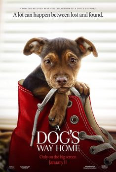 Rent A Dog's Way Home starring Ashley Judd and Bryce Dallas Howard on DVD and Blu-ray. Get unlimited DVD Movies & TV Shows delivered to your door with no late fees, ever. Ashley Judd, Home Movies, New Movies, Movies To Watch, Movies Online, Funny Movies, Latest Movies, Bryce Dallas Howard, Hindi Movies