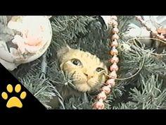 Gatos En Árboles De Navidad: Compilación - YouTube