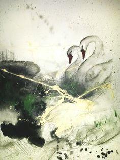 schwanenpaar schwarz weiß grün