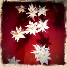 Hanging Paper Botanicals