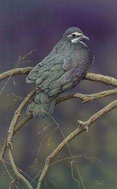 <b>Joby Island Dove</b> - <br/>Original (sold)<br/>Print $355 (unframed, edition of 100)<br/>25.5 x 41 cm