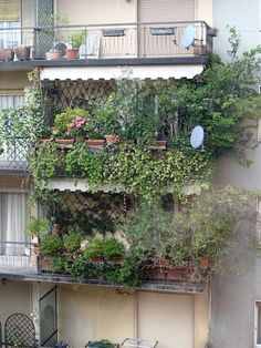 archiLAURA Home Design: Miracoli della natura in città | Miracles of nature in the city