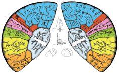 ¡Haz tu propio casco cerebral!