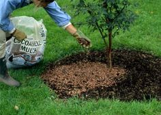 Keep Your Trees Healthy The entire article is chock full of great advice. Can't wait to read this one. Just bought and planted two new fruit trees! Garden Yard Ideas, Garden Trees, Lawn And Garden, Garden Projects, Garden Plants, Garden Landscaping, Backyard Trees, Garden Shrubs, Unique Gardens