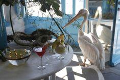 Caprice of Mykonos Cool Bars, Mykonos, Alcoholic Drinks, Greek, Liquor Drinks, Alcoholic Beverages, Greece, Liquor