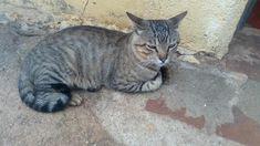 Meu finado gato :(