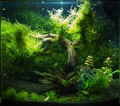 Tree Tank